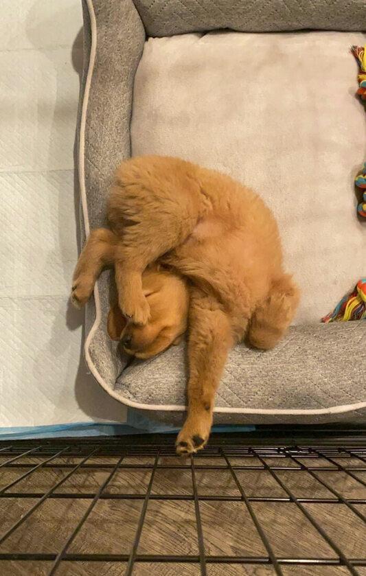 Psia drzemka w nietypowej pozycji
