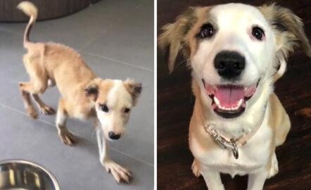 Te psy znalazły kochające domy. Zupełnie nie przypominają siebie sprzed lat