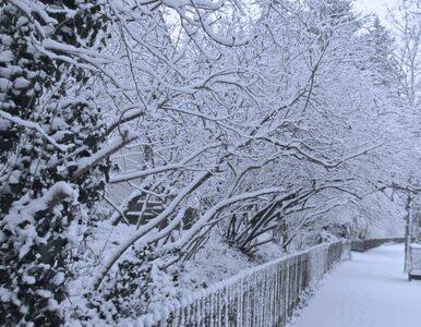 Pogoda na niedzielę: Spadnie śnieg i mocniej powieje
