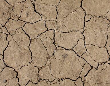 El Nino w tym roku? Naukowcy nie wykluczają anomalii jesienią