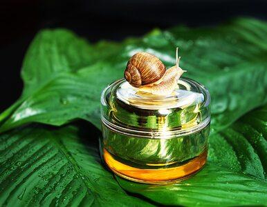 Śluz ślimaka: rewelacyjnie spłyca zmarszczki i uelastycznia skórę