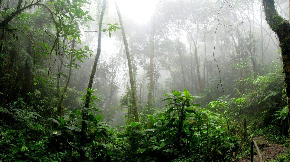 Amazonia - zdjęcie ilustracyjne