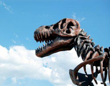 Co łączy mięczaki i dinozaury?