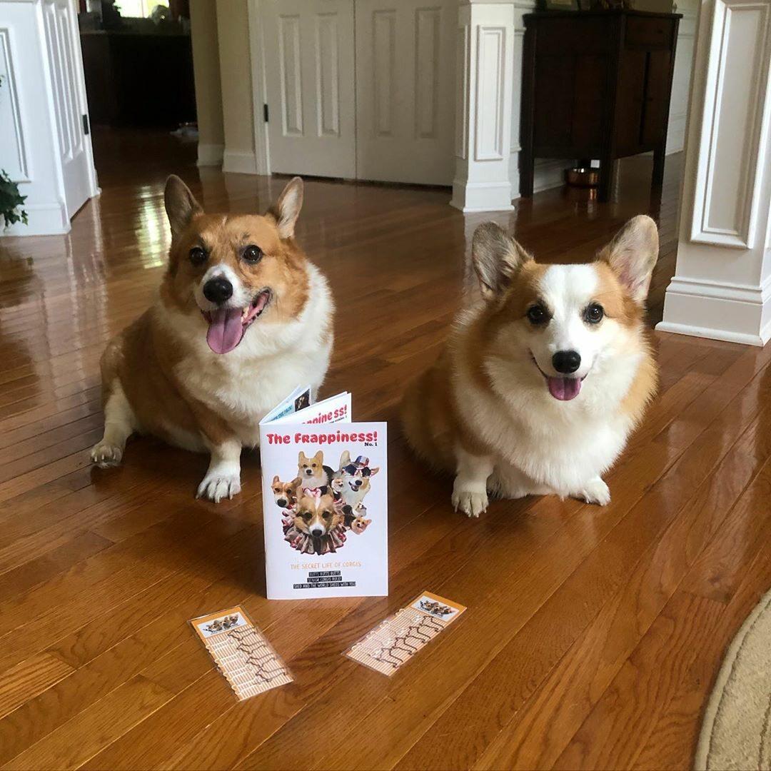 Psy corgi – Reecie, Peanut i Buttercup