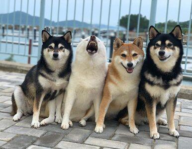 """Ten pies potrafi """"zepsuć"""" niemal każde zdjęcie. Jego koledzy nie mają szans"""