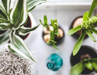 Kwiat doniczkowy na biurku – mniejszy stres w pracy?