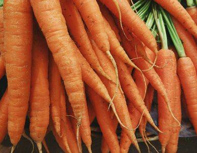 Dlaczego warto chrupać marchewki? 6 dobrych powodów