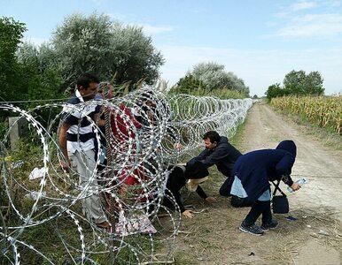 Niemal milion wniosków o azyl w Unii Europejskiej złożonych w 9 miesięcy