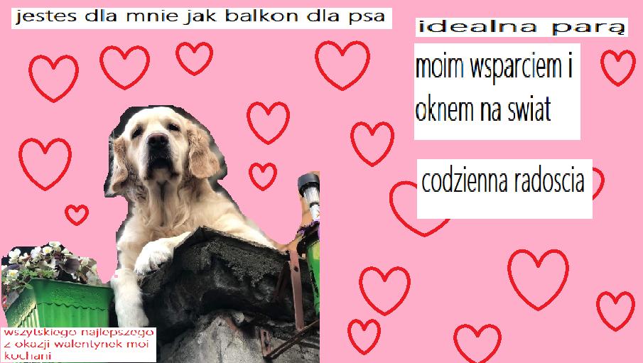 Zdjęcie z profilu Pjes z balkonu na rogu Politechnicznej i Bohaterów Getta Warszawskiego