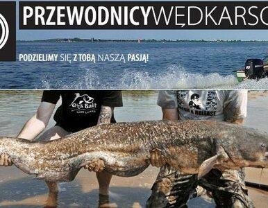 Sum-gigant, który wygląda jak smok. 90 kg ryby w Wiśle