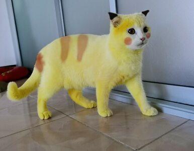 Leczyła kota kurkumą. Przypadkowo stworzyła prawdziwego Pikachu