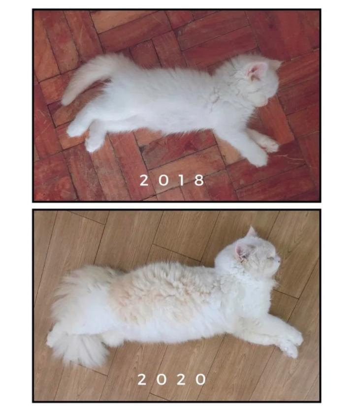 2018 kontra 2020 rok