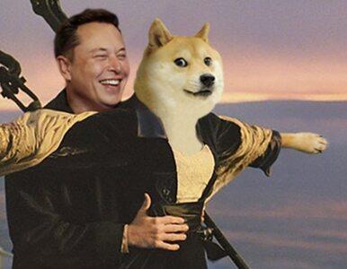 """SpaceX wyśle """"pieseła"""" na Księżyc. Elon Musk nie przestaje zaskakiwać"""