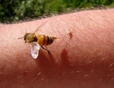 Za mało osób z alergią na jad owadów jest odczulanych – lekarze ostrzegają