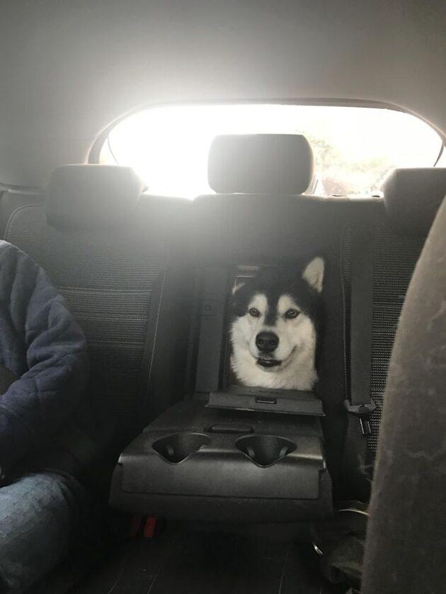 Specjalny schowek na psa