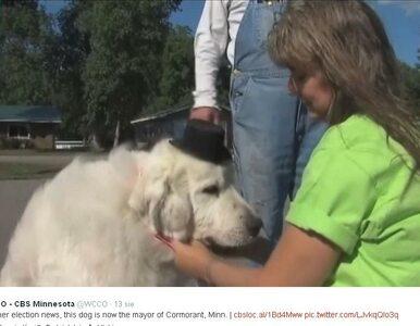 Burmistrzem miasta w USA został... pies