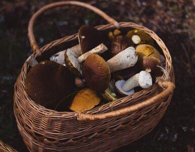 Czy dzieci mogą jeść grzyby?