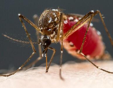 Obiecujące wyniki badań szczepionki przeciwko malarii