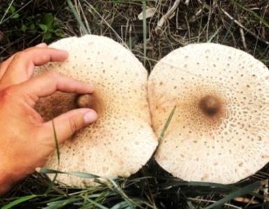 5 zalet jedzenia grzybów, o których nie miałeś pojęcia. Jak wpływają na...