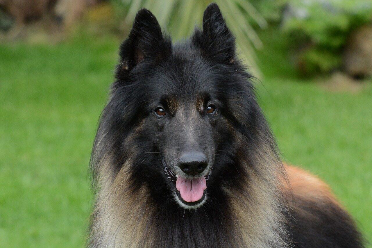 Jakiej rasy jest pies na zdjęciu?