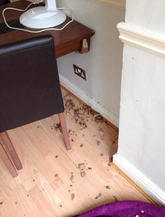 Zniszczenia wyrządzone przez Coopera