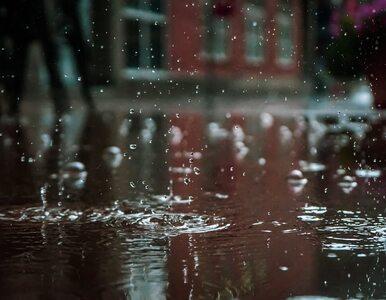 Na wschodzie kraju będzie pogodnie. Poza tym możliwe opady deszczu i burze