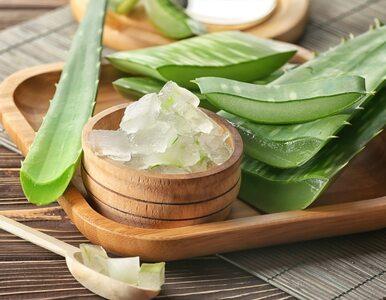 Mrożony aloes – rewelacyjny sposób na łagodzenie oparzeń i bąbli po...