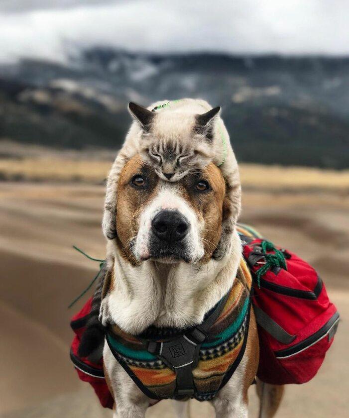 Ten pies i kot pokazują, że przyjaźń nie zna granic