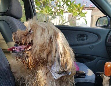 """W środku epidemii znalazł psa z kartką przywiązaną do szyi. """"Wybuchnąłem..."""