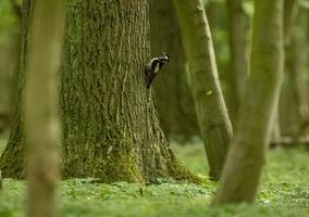 Czy Polacy są skłonni płacić naochronę przyrody? Badania