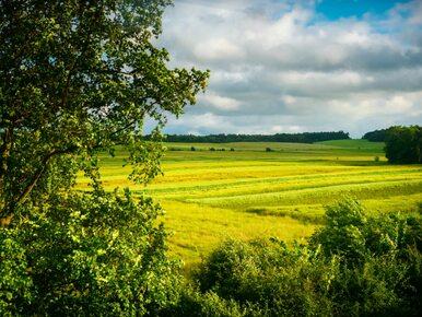 Rząd chce zlikwidować agencje rolne. PSL: Celem tych zmian jest wymiana...