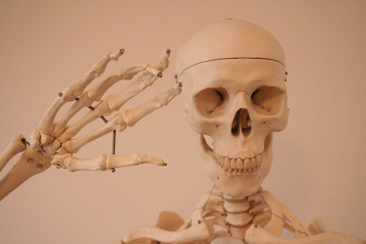 Z ilu kości składa się układ kostny dorosłego człowieka?