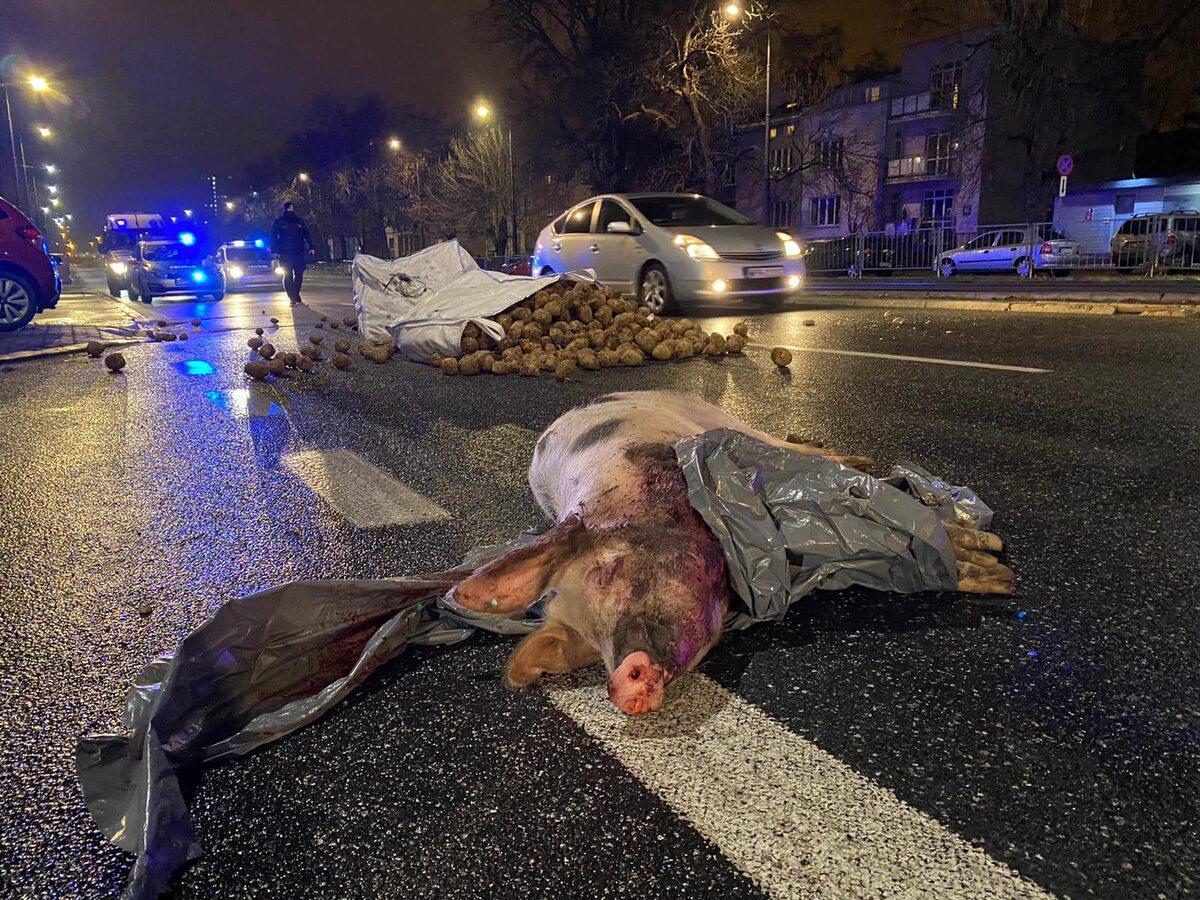 Protest Agrounii w Warszawie