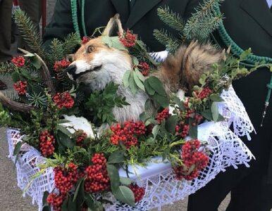 Martwy lis na pielgrzymce myśliwych. Będzie zawiadomienie do prokuratury