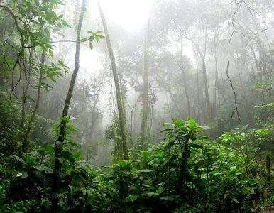 Gorączka złota w Amazonii