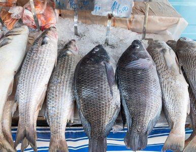 Jak wybrać świeżą rybę? Przydatne porady