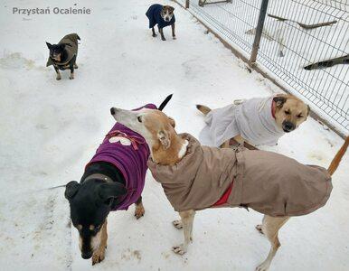Dają dom ponad 500 chorym zwierzakom. Mają ogromne problemy finansowe