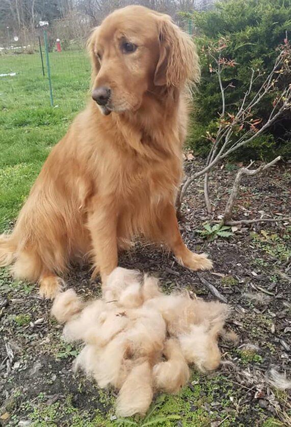 Ten pies nie wygląda na zadowolonego