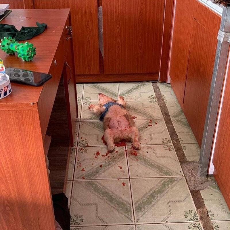 Pies przestraszył swojego właściciela. Okazało się, że pobrudził się... owocami