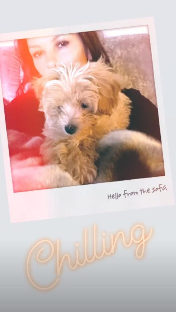 Catherine Zeta-Jones ijej nowy pies