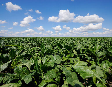 Rolnictwo i produkcja: dla dobra ludzi i planety