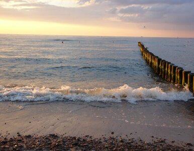 Toksyczne mikroorganizmy rozświetlają Zatokę Pucką?