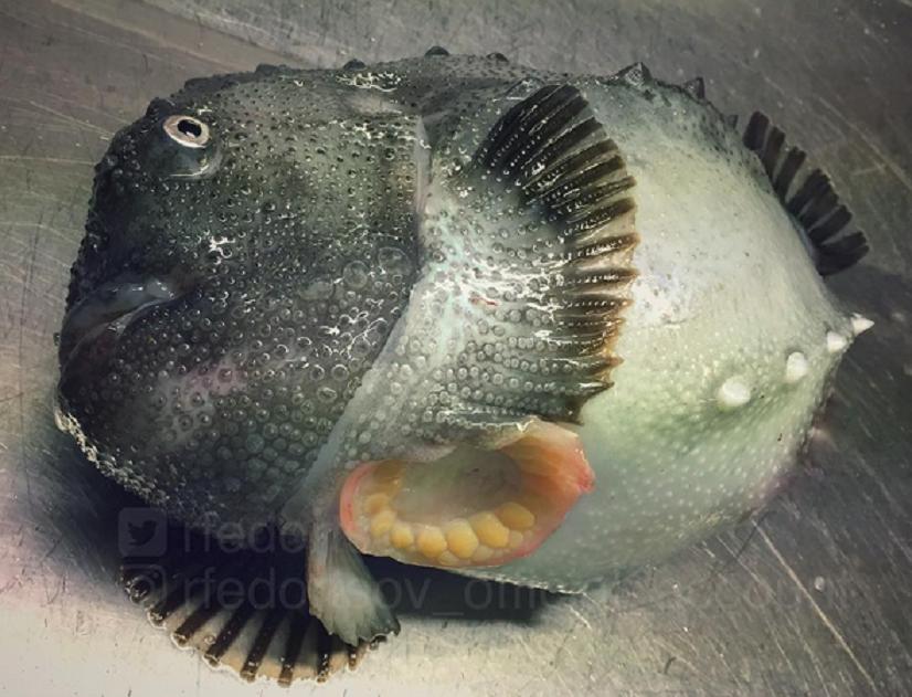 Fotografie ryb autorstwa Romana Fedorstova