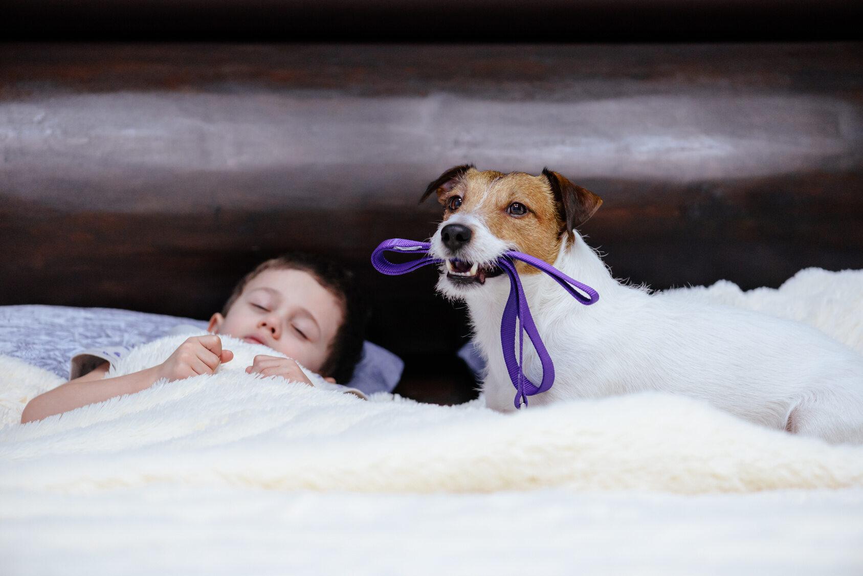 Pies budzi dziecko, bo chce wyjść na dwór