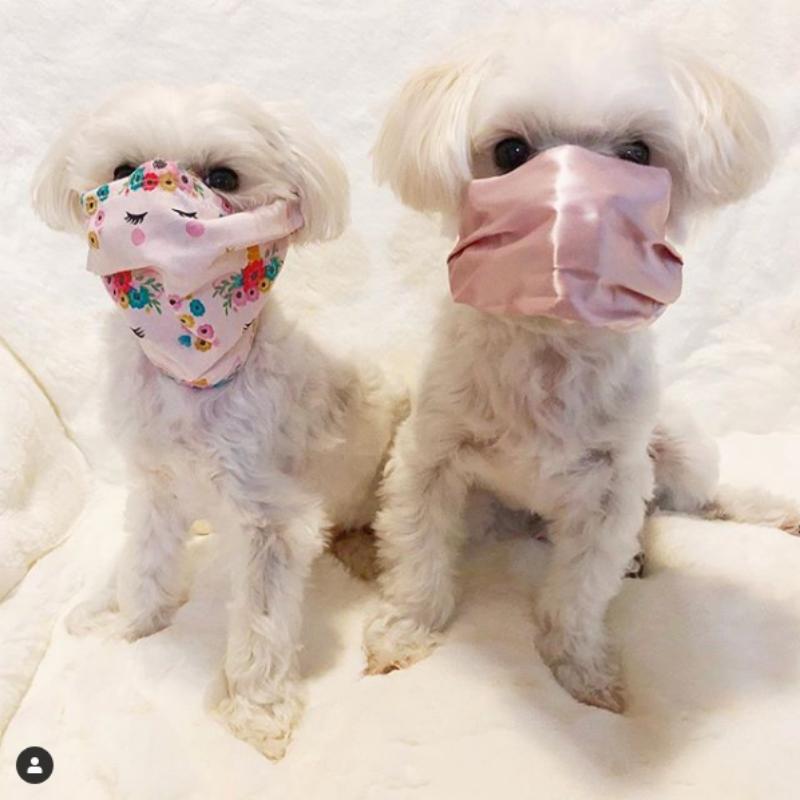 Psy w maseczce
