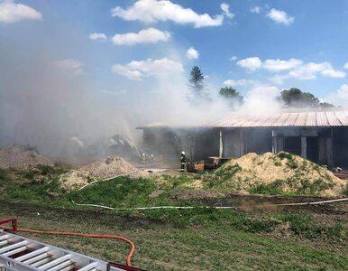 Garwolewo. Pracownicy z Ukrainy w pożarze stracili dobytek, zostali bez...