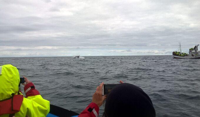 Obserwowanie wielorybów