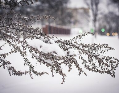 Prognoza pogody. Poniedziałek ze śniegiem i deszczem