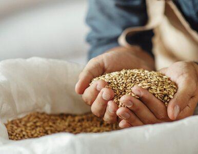 Słód jęczmienny: stymuluje laktację i poprawia kondycję organizmu