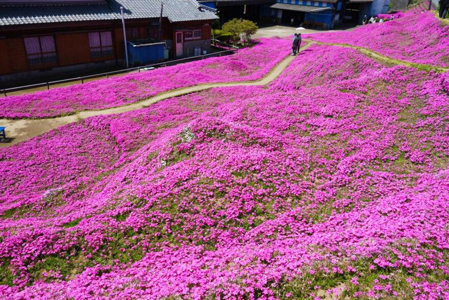 (fot.Shintomi Machiyakuba/boredpanda.com)
